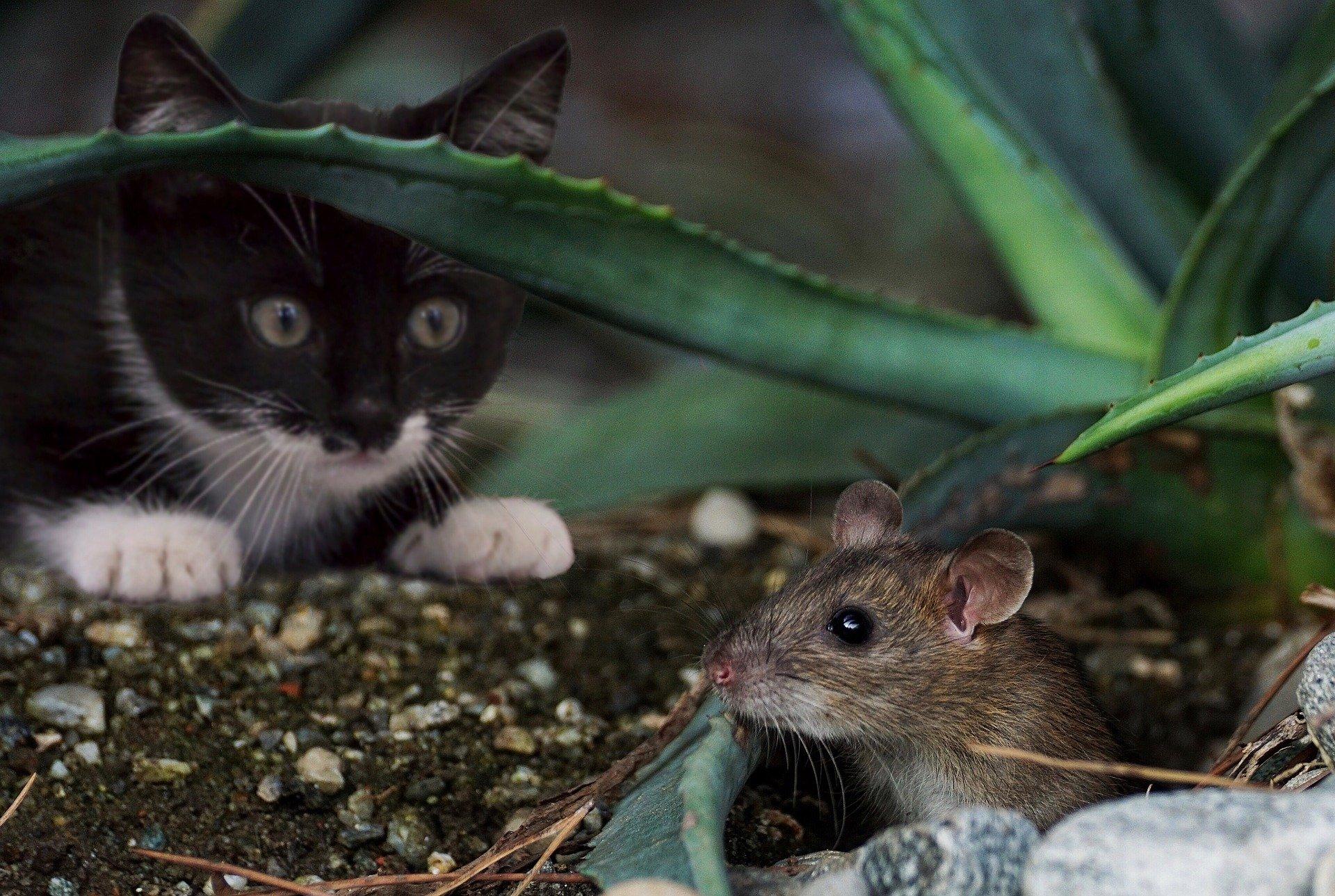 cat hunting